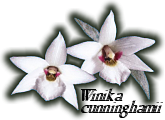 Orchid Council of New Zealand Inc.